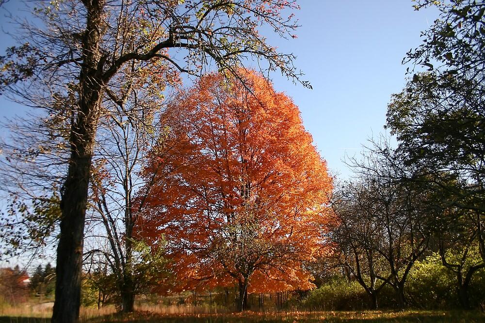 Autumn Glory by JusJane