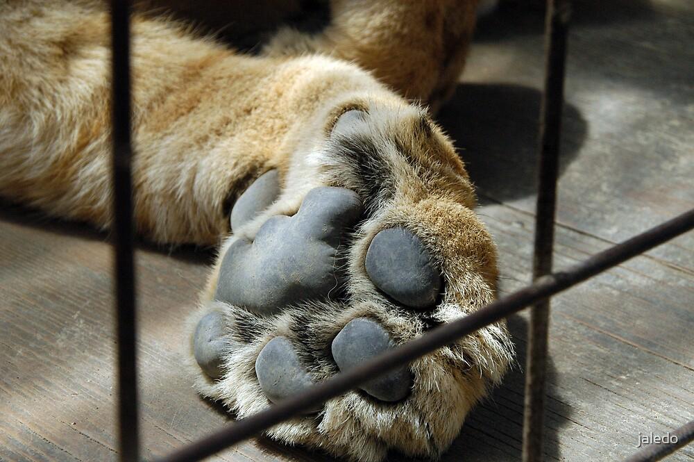 Paw in Captivity by jaledo