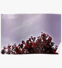 Red Treetops  Poster