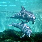 Dolphins by Irisangel