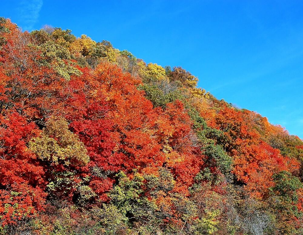 Bluff hillside in Fall by Jim Caldwell