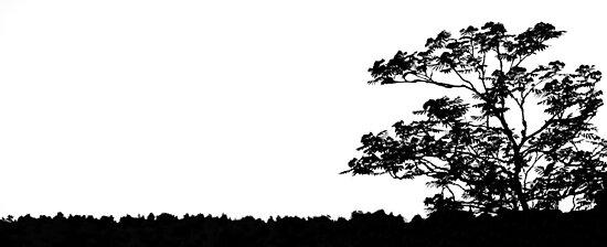 Ayahuasca by Matti Ollikainen