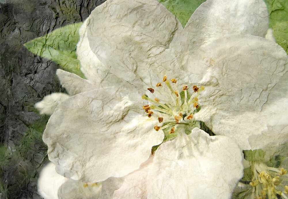 Apple Blossom Time by Judy Olson