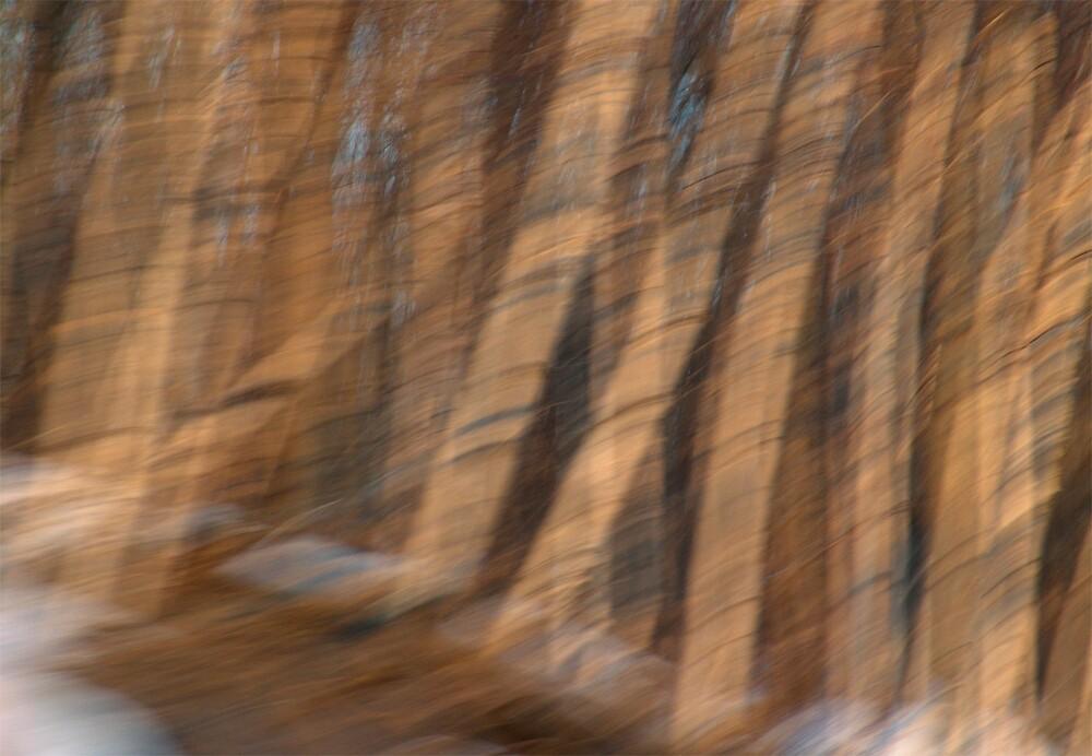 Birches by Judy Olson