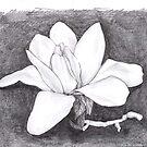 magnolia by cristina
