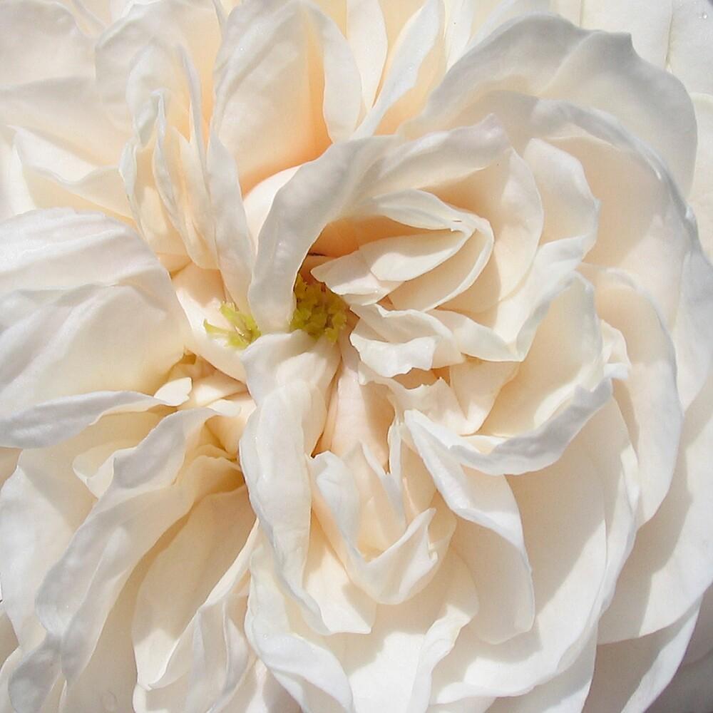 Vanilla Ice by BizziLizzy