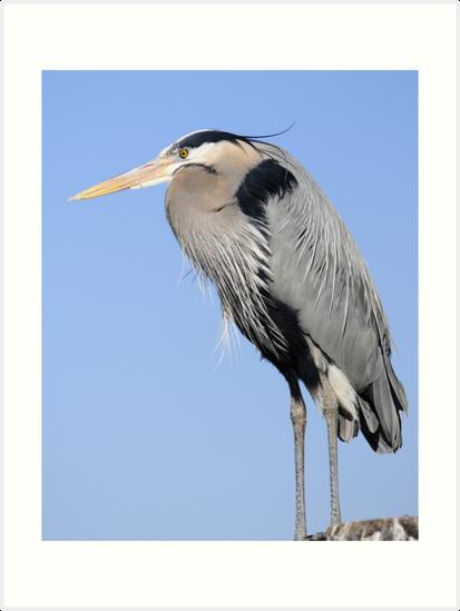 lone heron by George  Close