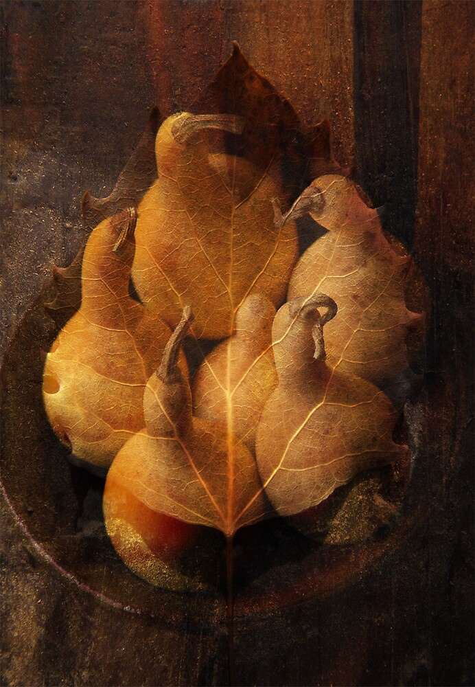Leaf and Gourds by Judy Olson