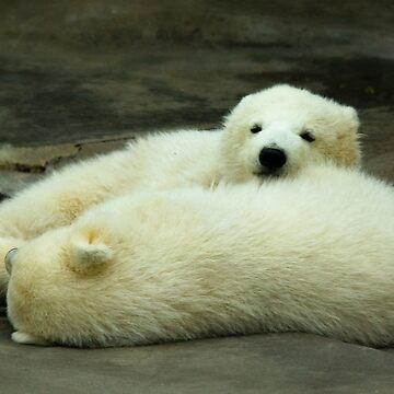 Realxing Polar Bear Cubs by PandT