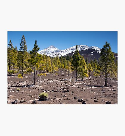 Over the Lava Fields and Tree Line to the Peak of El Teide Photographic Print