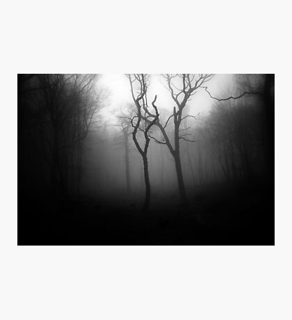 OLD SOULS Photographic Print