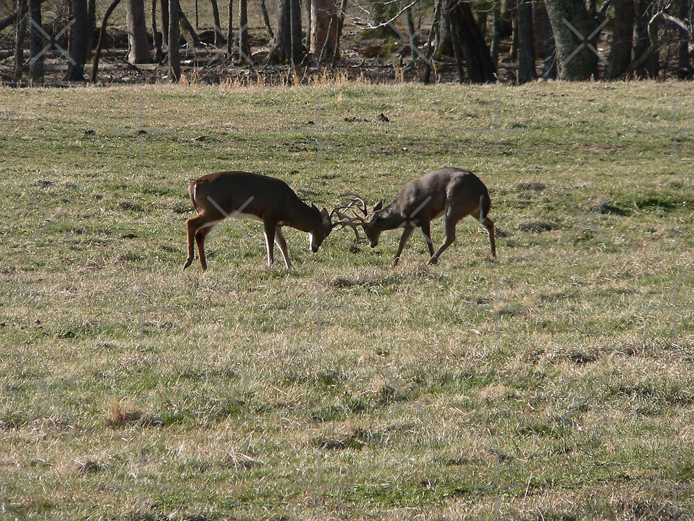 Bucks In The Rut by kevint