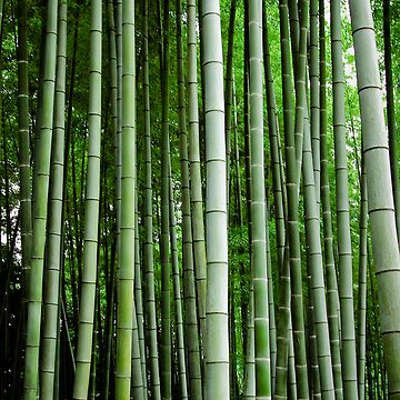 Bamboo by PandT