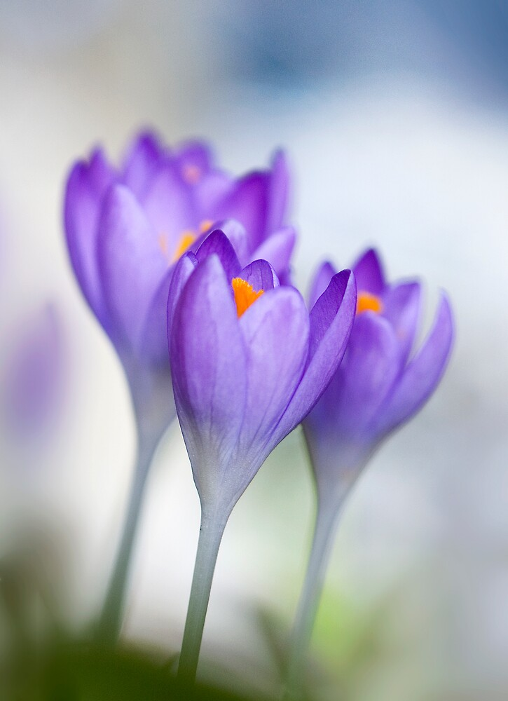 Spring by BenteKlevenberg