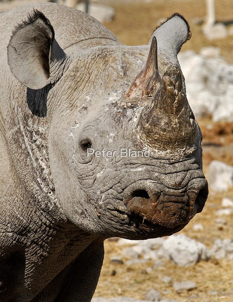 Black Rhino, Etosha, Namibia. by Peter Bland