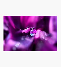 Pink drop on a flower Photographic Print