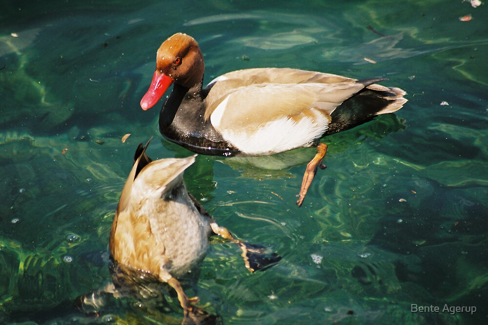 Ducks by Bente Agerup