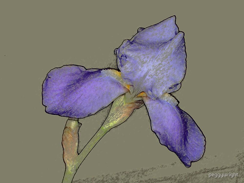iris by peggywright