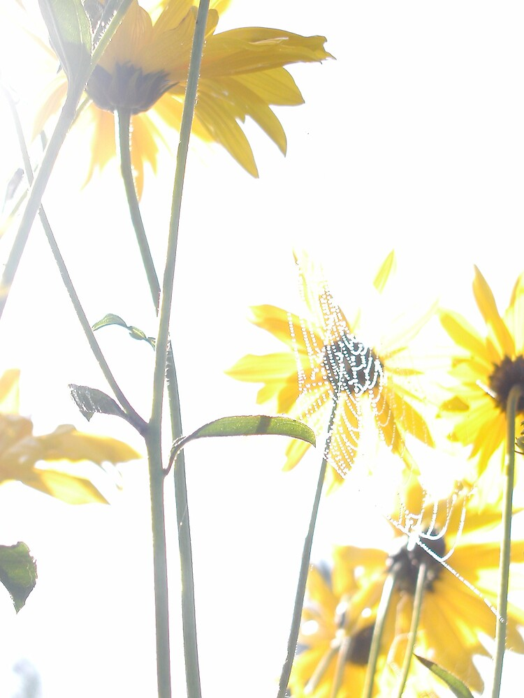 ......Flowers by marulalia