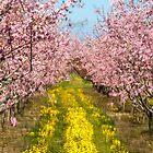 A Waking Blossom Dream  by Marilyn Cornwell