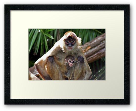 Black Handed Spider Monkey by Janine  Hewlett