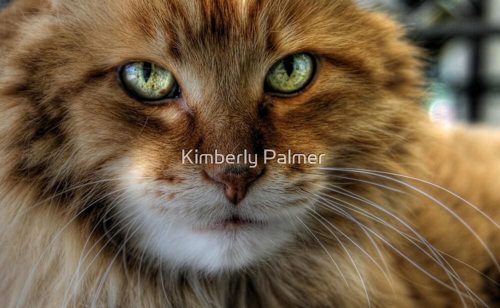 Calvin by Kimberly Palmer
