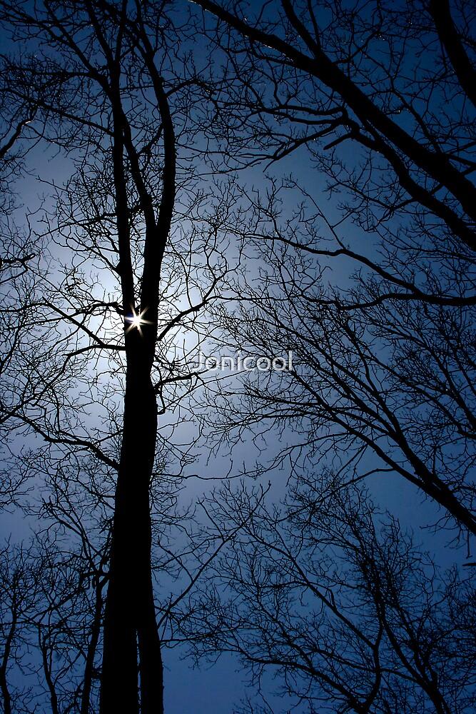 Mountain Trees by Jonicool