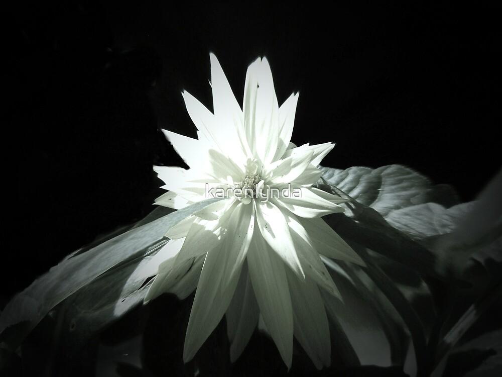 black and white by karenlynda
