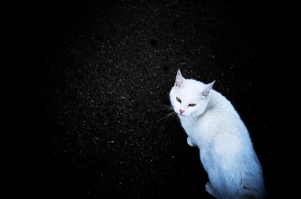 White by presty