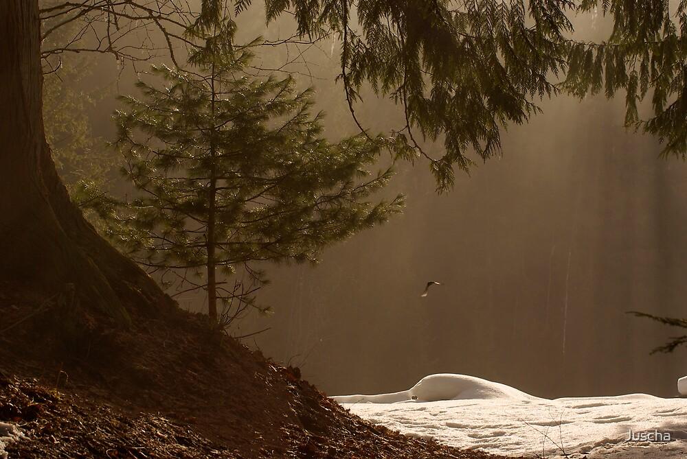 tree in mist by Juscha