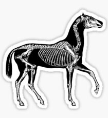 Black horse with skeleton Sticker