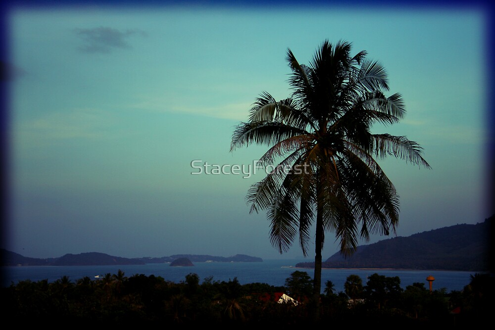 Palm Tree by StaceyForest