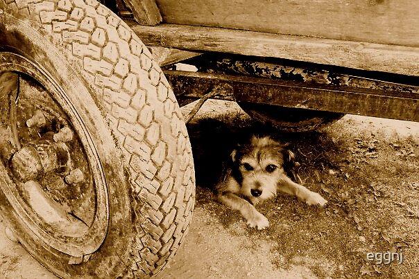Polish Pup by eggnj