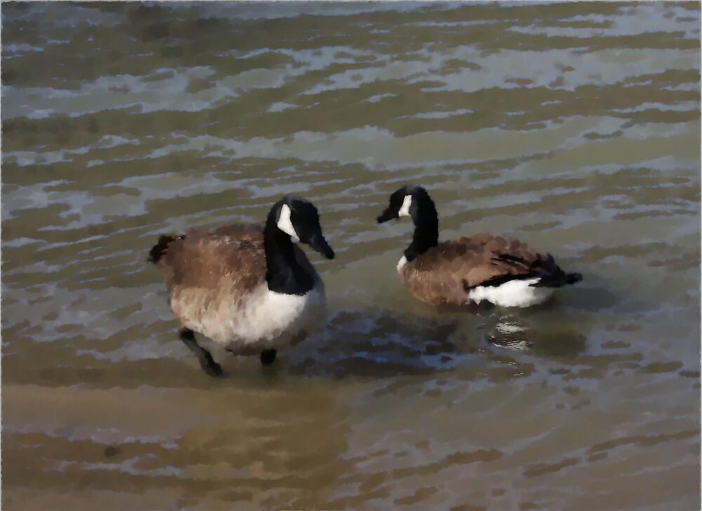Geese Greetings by shadyuk
