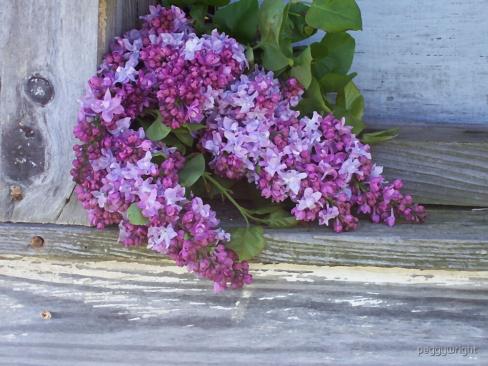 Lilac on Shed Window Ledge by peggywright