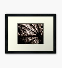 Leaf Spine Framed Print