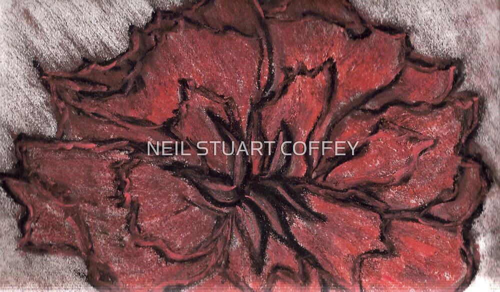 ROSE IN CHALK by NEIL STUART COFFEY