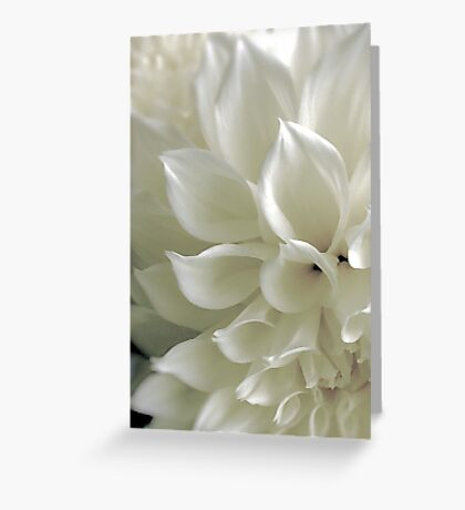 Vanilla Cream Greeting Card