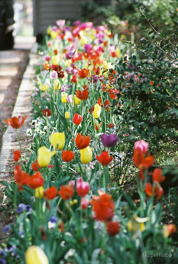 tip toe thru the tulips by flipperflopp