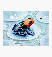 Poison Dart Frog  Photographic Print