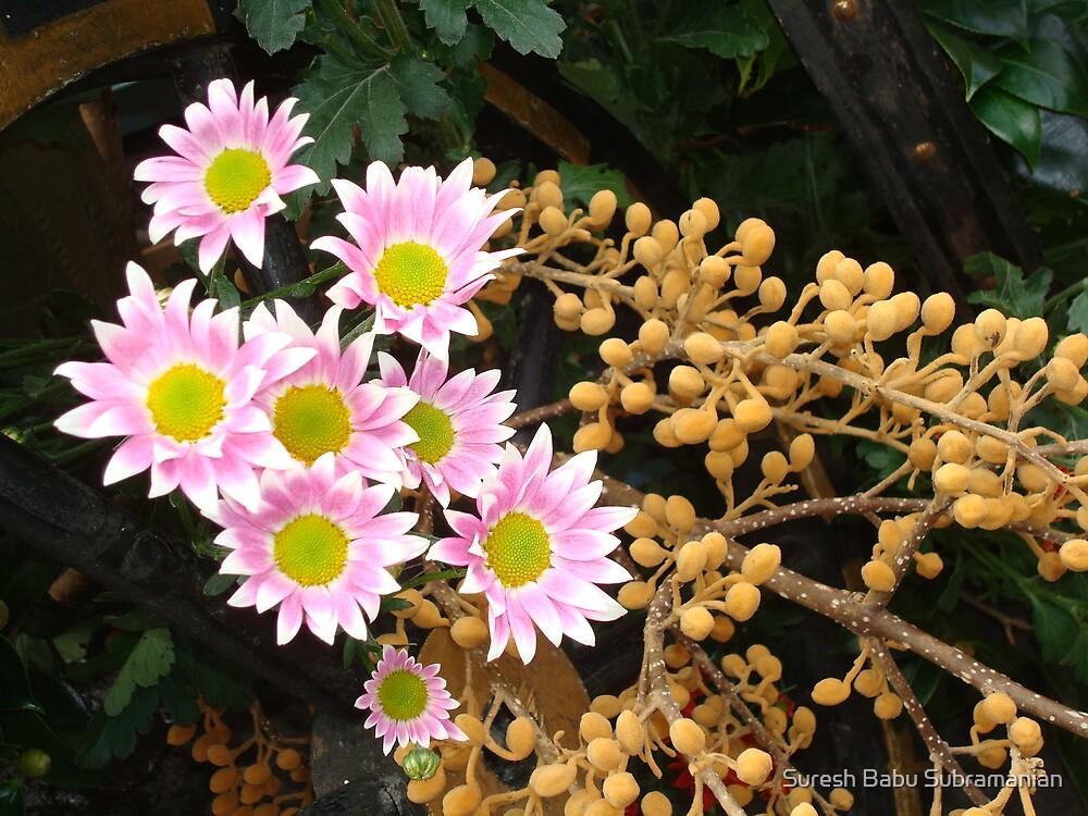 Flowers by Suresh Babu Subramanian