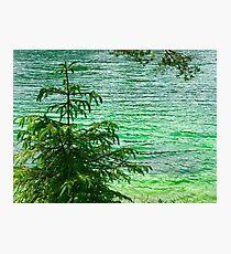 Tree & Green Lake 2 Photographic Print