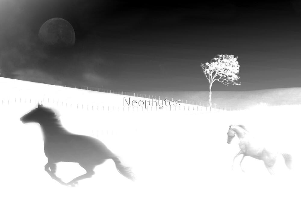 Dreams B/W by Neophytos