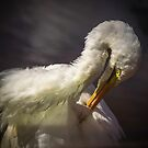 Great Egret #2 by Bette Devine
