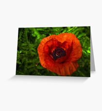 Red Poppy - Vibrant, Bold and Cheerful Greeting Card