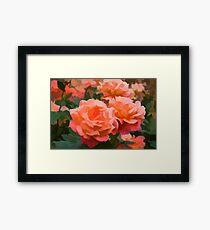Happy, Fragrant Roses - Impressions of June Framed Print
