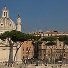 Rome - Umbrella Pines and Sunshine  by Georgia Mizuleva