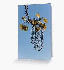 Springtime Jewelry Greeting Card