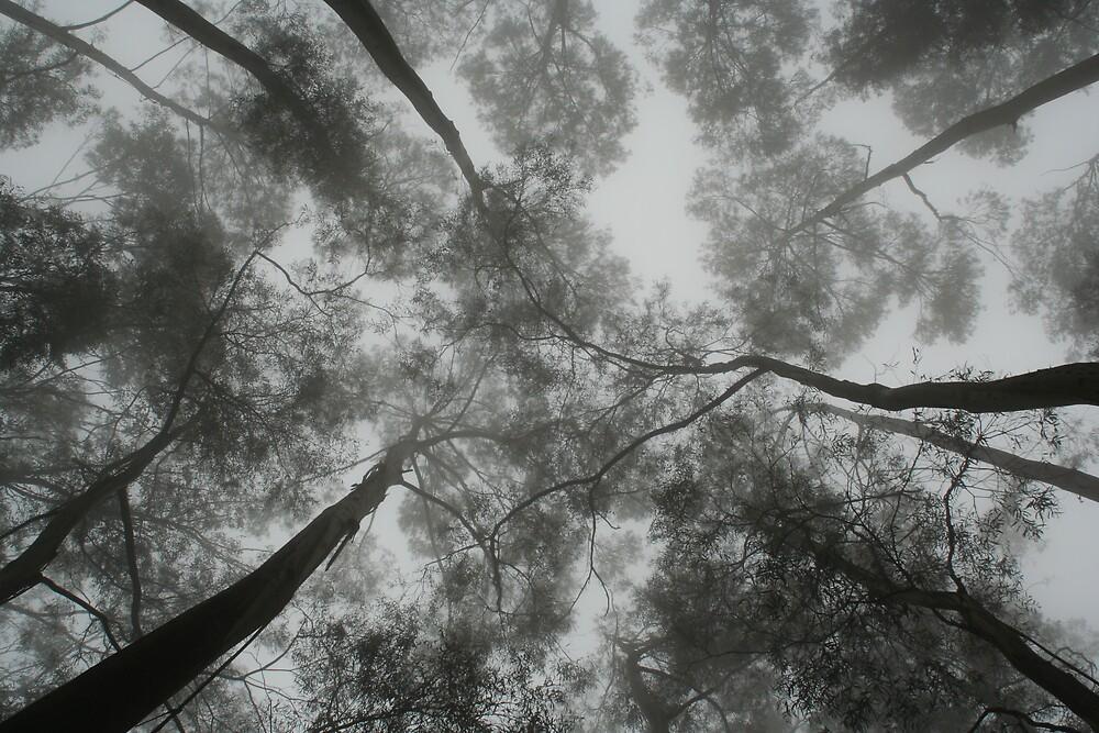 Skywards by Cherax