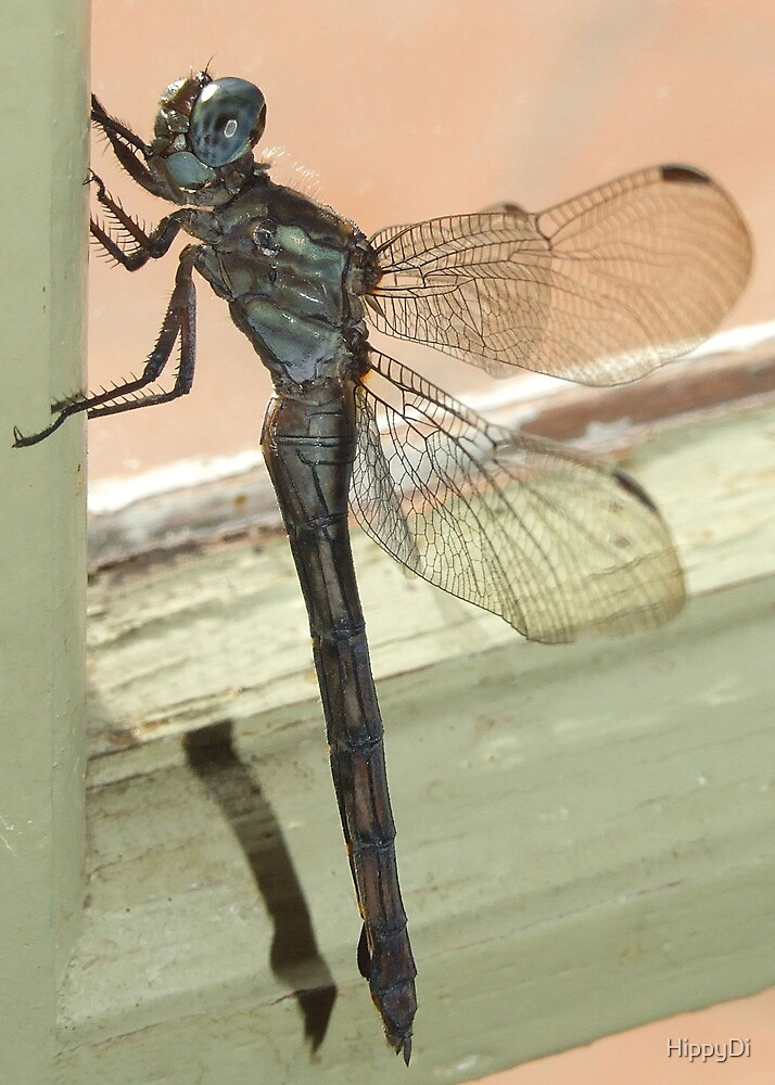 Dragonfly in armour by HippyDi